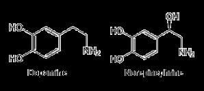dopamine-norepinephrine-epinephrine